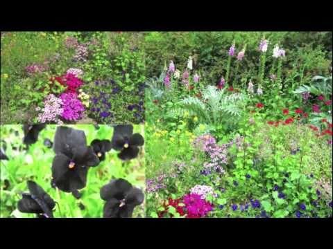 Parc floral de Paris (1er Juin 2009)