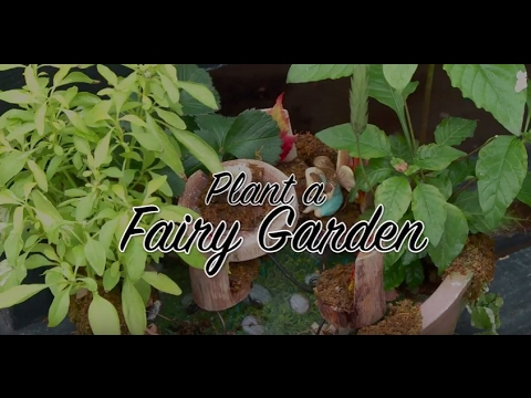 How to Make a Fairy Garden, Recipe by Tagawa Gardens - YouTube