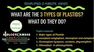 What are the three types of Plastids and what do they do? 3 minute simple video