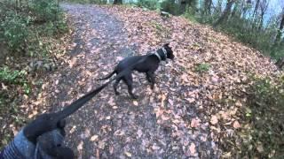 если собака тянет поводок способ 2