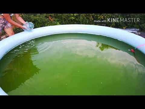 Вопрос: Как избавится от черных водорослей в бассейне?