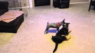 Radar And Sasha Play Fighting