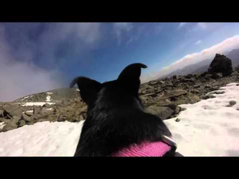 Skafell Pike Lake District With Dog Pov Gopro