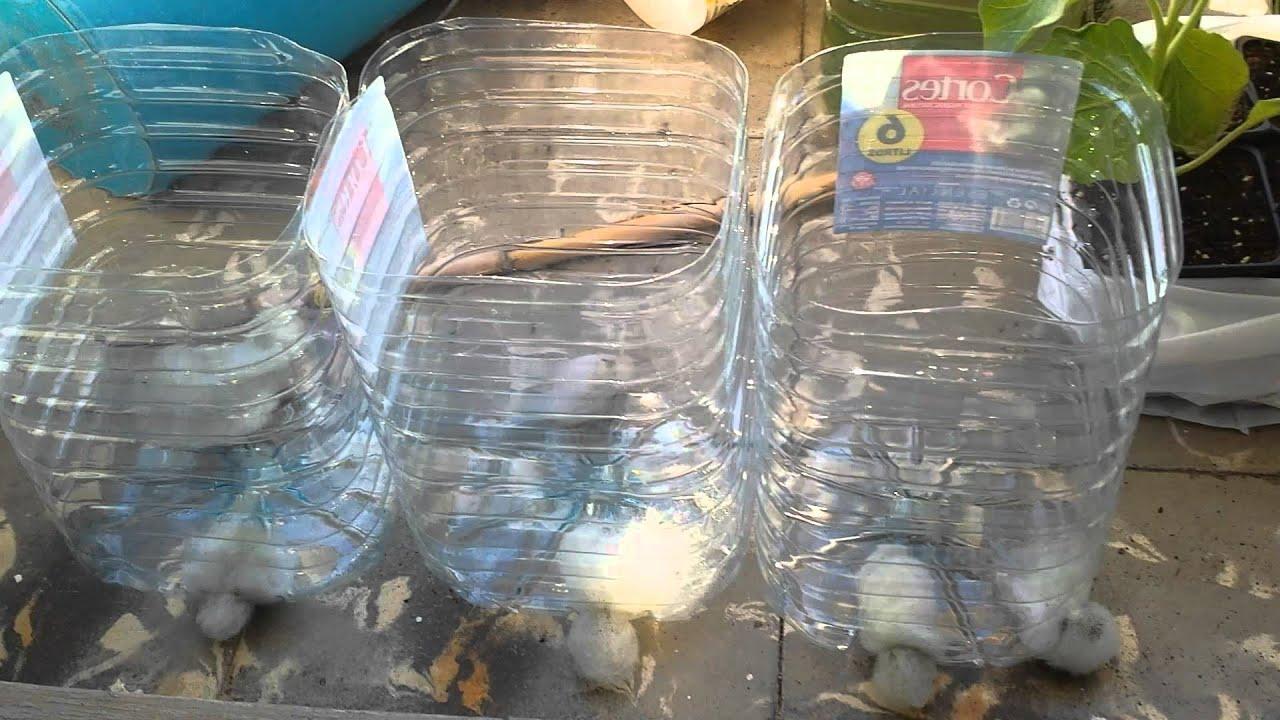 Macetas en botellas desechables youtube for Maceteros de botellas