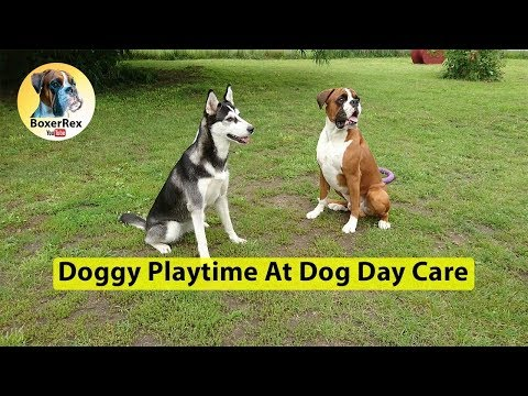 Play Time At Dog Day Care 👍 😁