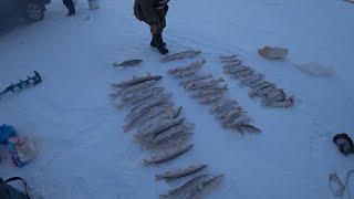 В этом озере полно крупной щуки Зимняя рыбалка 2021 Рыбалка в Казахстане