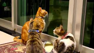 Funny Cats and Kittens Meowing
