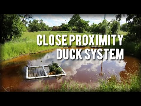 Permaculture Tip of the Day - Close Proximity Duck System