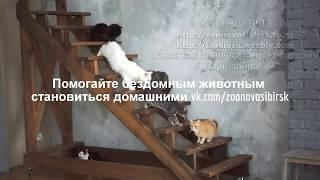 Кошки из приюта и фотостудия Атоп фотосессия бездомных животных