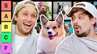 We Rate Dogs for 17 Minutes Straight (Tier List)