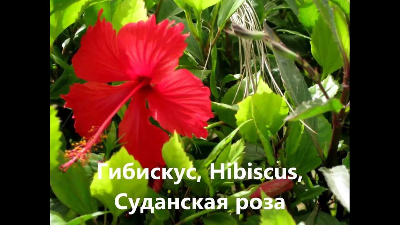 Египетские цветы с названиями и фото - YouTube