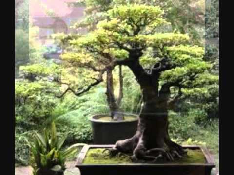 Bohdi sanders japanese garden meditation youtube for Garden state pool scene quote