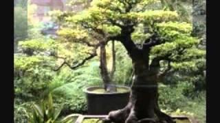 Japanese Garden Meditation