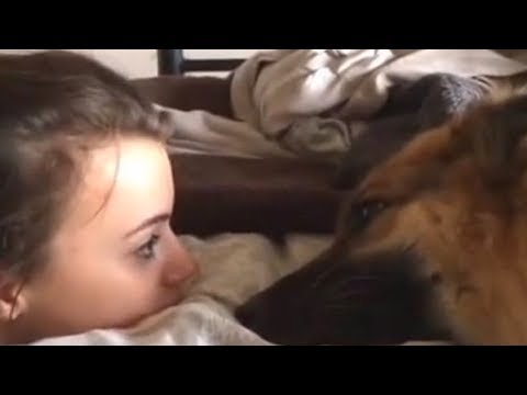 Lori - German Shepherd Whines To Her Human About Her Bad Day