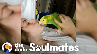 Loyal Parrot Is His Mom's Lifetime Companion | The Dodo Soulmates