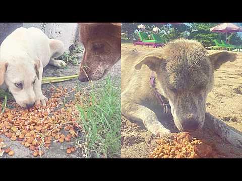 Bali Animal Food Bank