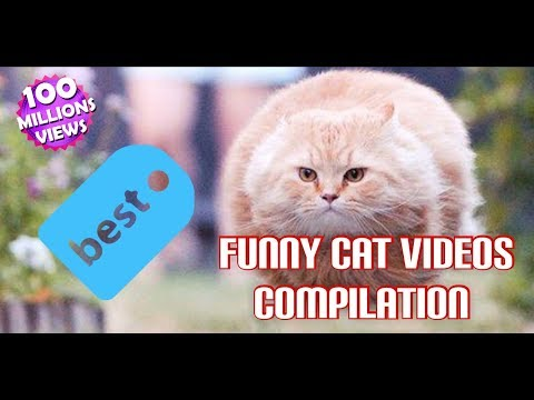 Funny and Cute Cat Videos Compilation 2018