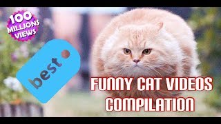 Funny Cats Compilation 2018