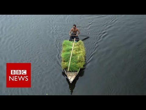 The Floating Farms Of Bangladesh - BBC News