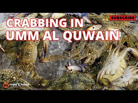 CRABBING In Umm Al Quwain