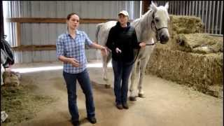 How To: Complete Horse Health Check