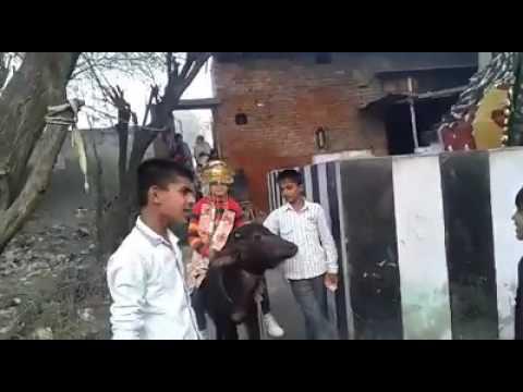 Joban ka barota  (jony Sharma Golu)