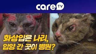 [케어TV]화상입은 나리, 입양간 곳이 병원?