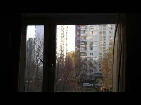 Воробей стучит в окно