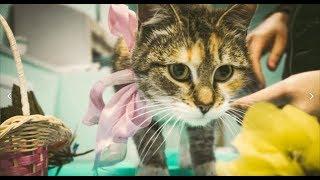 Самые лучшие фото кошки Рыси