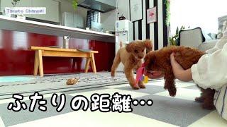 犬見知りで臆病なTaruちゃんが、少しずつRasukuに興味を示すようになり...