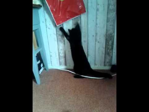 ooh ooh… stupid cat