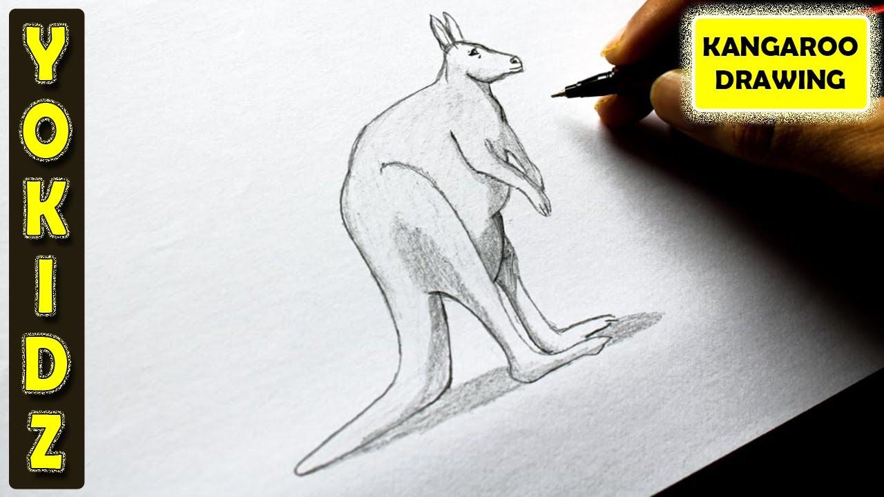 How to draw kangaroo youtube