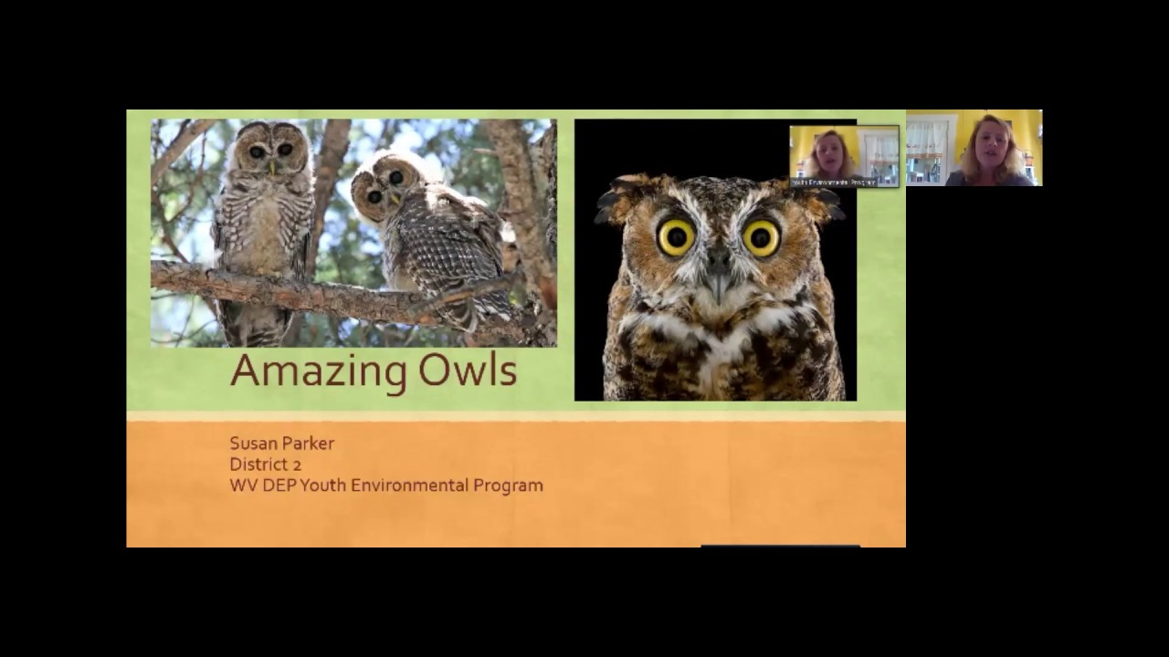 Amazing Owls webinar