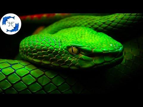 15 Most Venomous Animals on Earth