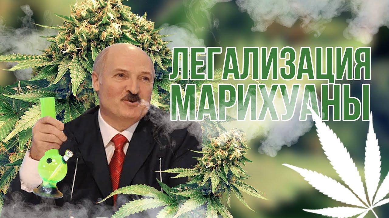 Легализация марихуаны беларусь применение конопляных семян