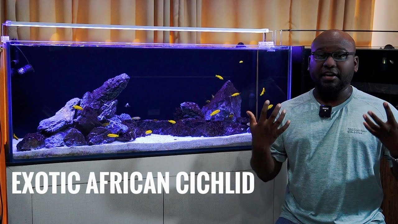 SALOUSI  | EXOTIC AFRICAN CICHLID | CARE GUIDE
