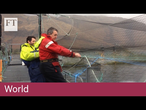 Scottish fish farms fight sea lice | World