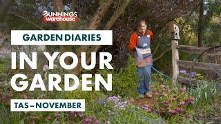 Gardening in November | Tasmania | Bunnings Garden Diary