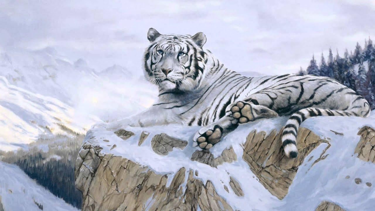 Fotos De Animales Salvajes Para Fondo De Pantalla: La Belleza De Los Tigres Blancos