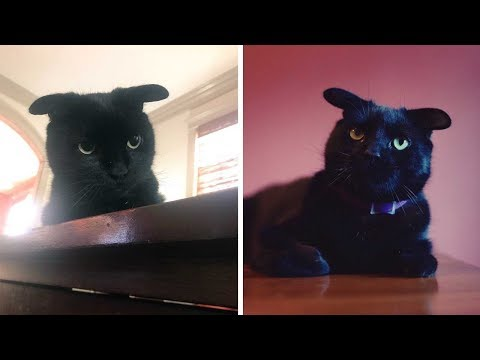 Pet Central - Black cat that looks like Baby Yoda has gone viral