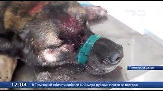 Уголовное дело за издевательство над животными