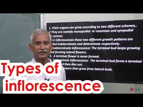 2.Botany | Reproductive Morphology | Types of Inflorescence