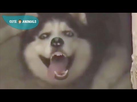 Tik Tok Cat, Dog, Animals: Funny Cute Pets Compilation #3