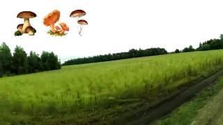 Продается участок. Земельный участок.(Продается участок - 50 соток (0.5 га). Симферопольское шоссе (трасса М2), 320 км. Продается Участок - расположен..., 2016-08-20T13:49:43.000Z)
