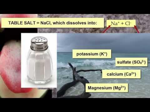 Salinity Impacts On Marine Life