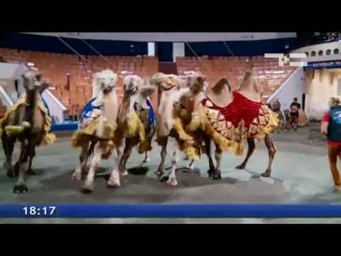 Цирк приехал! В программе «Баронеты» - 90 артистов и 100 животных