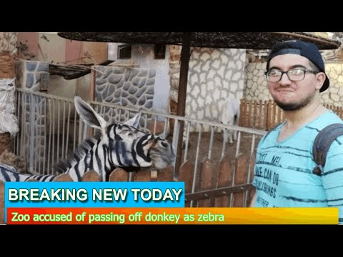 Breaking News - Zoo accused of passing off donkey as zebra