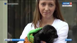 Смотреть видео Вести Санкт Петербург  Выпуск от 15 04 2019 онлайн