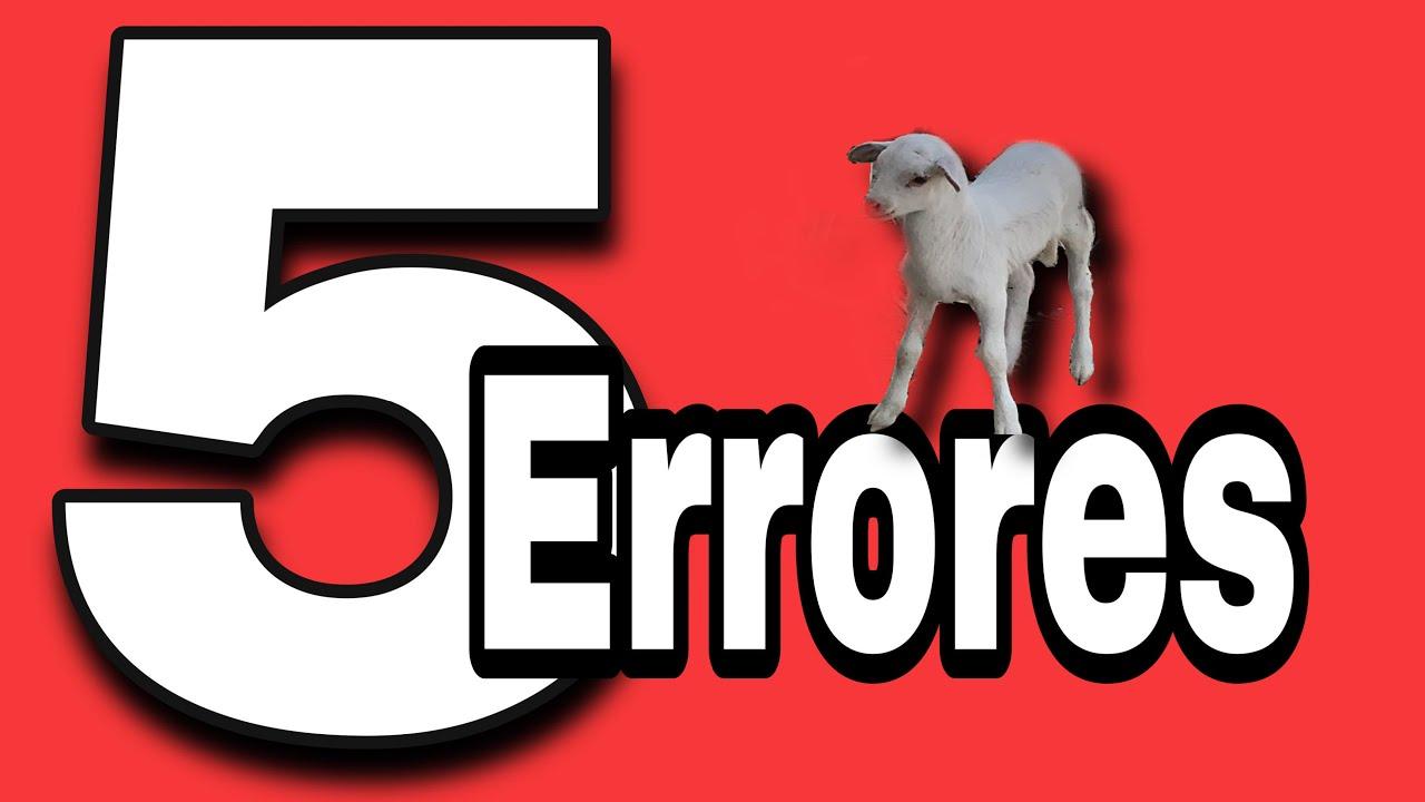 5 Errores que tuve con Mis Borregos