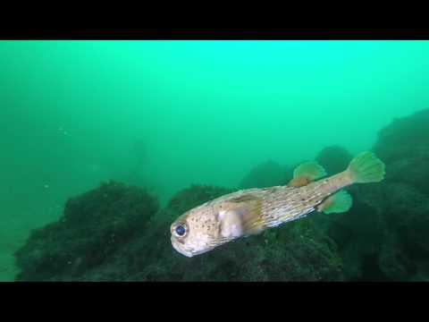 Costa Rica scuba diving Feb22 Mar7, 2017